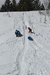 Kids sledding (Aggiewelshes) Tags: travel winter snow april snowshoeing wyoming olsen jacksonhole jovie grandtetonnationalpark 2016 gtnp taggartlaketrail