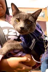 GatoFest2016 (Jyuria D) Tags: festival cat gato evento neko mascotas cdmx gatofest