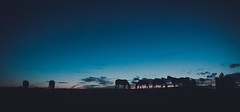 Horse Sunset Group (Zach_Woolf) Tags: sunset horse nature silhouette canon outside wideangle explore 24mm lightroom canon5dmarkii