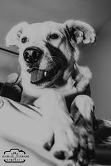 DSC_0078 (Bela Putriche Fotografia) Tags: family dog love co animal familia cat amor gato cachorro cachorros bichos animais filhos filhote babycat cani adoo adote nocompreadote