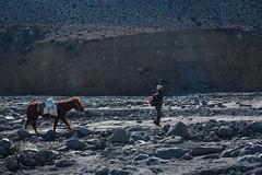 Himalayan Help (elenaleong) Tags: nepal horse rocky himalayas nepali jomsom kagbeni oceanfloor