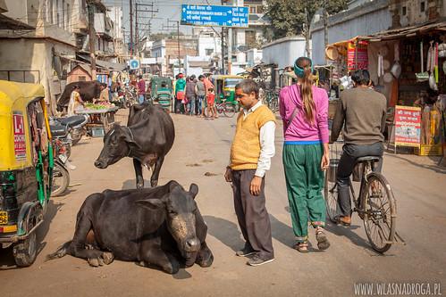 Ruch uliczny w Waranasi
