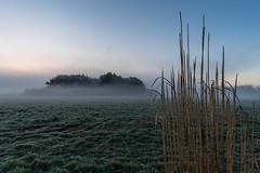 Insel im Nebelfeld (webpinsel) Tags: nebel natur landschaft wald sonnenaufgang schilf münsterland frühling morgendämmerung halternamsee hullern