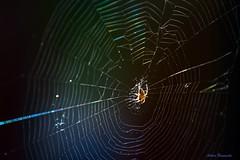 Leitfaden... (guideline...) (acbrennecke) Tags: light backlight spider nikon colours web cobweb guideline nikon5500 achimbrennecke