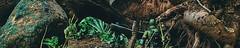 Title and description pending... (shefner77) Tags: panorama gijoe lost rainforest war long military joe panoramic jungle barbecue stalker mission gi sgt marauders beachhead