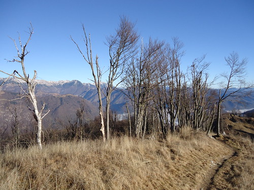 Monte Piatto/Trniski Vrh