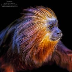 Stunning Moments (photoga photography) Tags: england nature animals canon wildlife ngc monkeys animalkingdomelite ourplanet photogaphotography