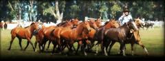 Los Colorados de Formozo (Eduardo Amorim) Tags: horses horse southamerica argentina criollo caballo cheval caballos cavalos pferde herd cavalli cavallo cavalo gauchos pferd ayacucho chevaux gaucho cavall  amricadosul gacho amriquedusud provinciadebuenosaires  gachos  sudamrica suramrica amricadelsur sdamerika crioulo caballoscriollos criollos  tropillas buenosairesprovince americadelsud tropilhas tropilla crioulos cavalocrioulo americameridionale tropilha caballocriollo eduardoamorim cavaloscrioulos