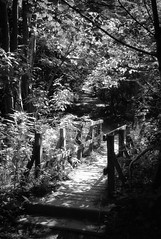 (ebenette) Tags: leica photography m8 dartmoor ebenette