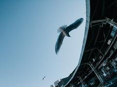 151229_052_P1040866 (oda.shinsuke) Tags: bird fisheye tsukijimarket かもめ カモメ vsco bcl0980