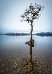 Solo (rgcxyz35) Tags: mountains scotland lochlomond lochs trees milarrochybay snow