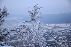 frosted (guenter_holo) Tags: schnee landscape austria frozen outdoor wand landschaft hohe n