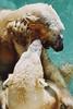 Untitled-23 (ucumari photography) Tags: 2003 bear animal mammal zoo oso nc december north polarbear carolina willie willy masha eisbär wilhelm ursusmaritimus シロクマ oursblanc osopolar 北极熊 ourspolaire orsopolare jääkarhu 북극곰 ucumariphotography ísbjörn niedźwiedźpolarny полярныймедведь الدبالقطبي
