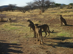 Africa 2015 087 (Absolute Africa 17/09/2015 Overlanding Tour) Tags: africa2015