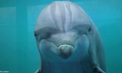 Einyel (supermandrin1) Tags: madrid blue naturaleza nature water azul angel mammal photography zoo aquarium agua marine dolphin dolphinarium delfines bottlenose fotografa delfn delfinario marinos mamferos mular einyel
