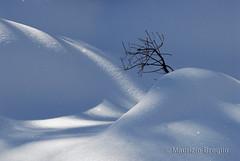 Orvieille 03 (maurizio.broglio) Tags: parco gran paradiso nazionale valsavarenche orvieille