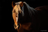 Duke (Cindy Mulvihill) Tags: horse lowlight belgian draft workhorse