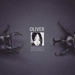 兜锹2 (OLIVER的甲蟲) Tags: 獨角仙 鍬形蟲 oliverlin1123 兜锹之恋 兜鍬之戀