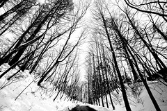 Sometimes you don't need color (QWEbie) Tags: travel trees winter sky white snow black cold tree tourism ice japan forest court landscape hotel asia afternoon calm clear paths karuizawa tranquil atmospheric 500px bleston ifttt