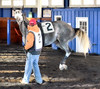 2015-12-19 (48) r7 #2 Keepyuriondabalado (JLeeFleenor) Tags: photos photography md marylandracing marylandhorseracing racing laurelpark horses thoroughbreds equine equestrian cheval cavalo cavallo cavall caballo pferd paard perd hevonen hest hestur cal kon konj beygir capall ceffyl cuddy yarraman faras alogo soos kuda uma pfeerd koin حصان кон 马 häst άλογο סוס घोड़ा 馬 koń лошадь grey gray dance paddock maryland