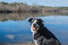 Bonny at Spring Lake 4/52/2016 (smile KB) Tags: lake santarosa bonny springlake 52weeksfordogs