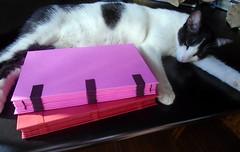 Two new sketchbooks and Namast - DSC02444 (Dona Mincia) Tags: sleeping art animal cat handmade gato livro bookbinding dormindo caderno sketcbook namast