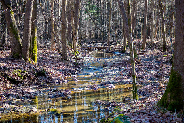 Hoosier National Forest - Charles C. Deam Wilderness - January 29, 2016
