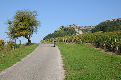 taking the curve (Melville B.) Tags: road vineyard vines jura vignes chteauchalon melvilleb