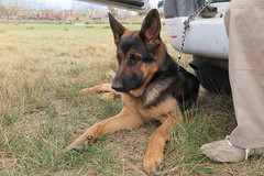 Adiestramiento canino (esta_ahi) Tags: barcelona espaa dog canon spain perro canino conrado gos pastoralemn perras  vilafrancadelpeneds adiestrador