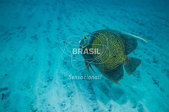 NE_Abrolhos0041 (Visit Brasil) Tags: horizontal brasil fauna natureza bahia nordeste detalhe externa abrolhos semgente subaqutica diurna