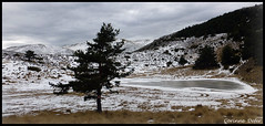 """Foret du Cheiron"" (Corinne DEFER - DoubleCo) Tags: travel sky panorama mountain france nature montagne landscapes lac ciel neige nuage nuages paysage paesaggi paysages paisagens landschaften panoramique ombres nuageux grolires cheiron grolireslesneiges corinnedefer updatecollection"