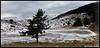 """""""Foret du Cheiron"""" (Corinne DEFER - DoubleCo) Tags: travel sky panorama mountain france nature montagne landscapes lac ciel neige nuage nuages paysage paesaggi paysages paisagens landschaften panoramique ombres nuageux gréolières cheiron gréolièreslesneiges corinnedefer updatecollection"""
