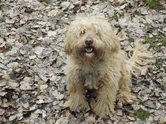 Toto (chirila.alexxa) Tags: portrait dog natura romania portret botanica iasi gradina caine