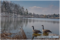 MARCH 2016  NM1_8509_011313 (Nick and Karen Munroe) Tags: winter lake ontario canada water landscape geese tranquility goose lakeside icestorm lakeshore wintertrees tranquil canadageese brampton icecrystals winterstorm heartlake ontariocanada 2470 nickandkaren karenandnick heartlakeconservation heartlakeconservationarea munroephotography nikon2470f28 munroedesignsphotography munroedesigns karenick karenick23 nickmunroe nikond750 nickandkarenmunroe karenandnickmunroe karenmunroe