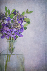 Texas Mountain Laurel -6061 (lornahamblin) Tags: flowers texture floral purple springtime flypaper texasnative zuiko5018 legacylens vintageprime