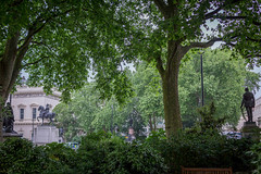 Open Garden Squares 2015 - 1847.jpg (DavidRBadger) Tags: city london greenspace planetree 2015 cityofwestminster londonplanetree urbansquare opengardensquares carltonhouseterracegarden