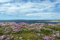 Doolin Spring (Flapweb) Tags: flowers ireland seascape landscape doolin countyclare