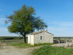 """Cabane (Daniel Biays """" VOIR MON PROFIL """") Tags: vignes vignoble arbre cabane gironde mdoc saintseurindecadourne"""