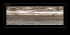 """REGATA EN EL ESTRECHO DE GIBRALTAR. (CODIGO DE LUZ """"El Fotgrafo"""") Tags: blackandwhite bw byn blancoynegro monocromo mar barcos nubes lamar vela regata veleros ceuta brancoepreto estrechodegibraltar pendegibraltar sepiado pepegutierrez ceutaperladelmediterrneo pgutierrez cdigodeluz realclubnauticocasdeceuta clasecruceros"""