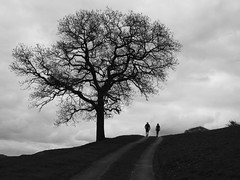 Make a difference (Lancashire Lass ...... :) :) :)) Tags: sky bw tree monochrome grass silhouette blackwhite explore lane walkers