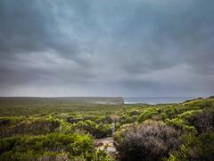 Royal Coast Walk (Prishan De Silva) Tags: park friends beach weather trek royal dramatic windy australia national nsw sublime