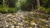Mountain stream (Eduardo_il_Magnifico) Tags: trees mist mountain colour green water creek forest river flow rocks stream newengland australia nsw newsouthwales sigma1020mm bellingen nikond7000
