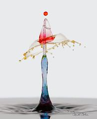 _MG_3308-Yellow-Red-blue-multi-collision (Carol Cohn) Tags: macro water droplets drops gotas splash waterdrops liquid watersplash waterart fluiddynamics highspeedphotography liquidart liquidsculpture splashart highspeedphotographycanon100mm28lis