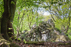 da hinten (sduesterhus) Tags: tree nature forest landscape nikon dof outdoor natur blurred trunk fels landschaft wald unscharf baum stamm hohemark goldgrube d5000