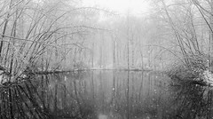 20160403 (Homemade) Tags: show trees panorama ny newyork water pond woods snowing westchestercounty southsalem lewisboro snowinspringtime sonydscrx100 onatrupreserve