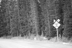 DSC_1378 (Andrew Paterson) Tags: alberta avalanche