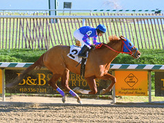 2016-01-03 (51) r4 Larry Mejias on #2 Love to Prospect (JLeeFleenor) Tags: photos photography md marylandracing marylandhorseracing laurelpark outside outdoors jockey   jinete  dokej jocheu  jquei okej kilparatsastaja rennreiter fantino    jokey ngi horses thoroughbreds equine equestrian cheval cavalo cavallo cavall caballo pferd paard perd hevonen hest hestur cal kon konj beygir capall ceffyl cuddy yarraman faras alogo soos kuda uma pfeerd koin    hst     ko  fourup maryland
