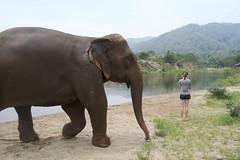 Elephant Nature Park (kcosgrove) Tags: mai chiang