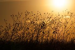 parvada (tangaxoan) Tags: naturaleza sol méxico atardecer paisaje nubes parvada ocaso siluetas cuautla morelos pastizal filtropolarizador