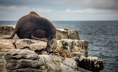 what ages are you coming from? (iSteven-ch) Tags: travel sea southamerica canon ecuador rocks pacific galapagos iguana sealion greeting ec islaplazasur eos6d